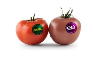 GMO vs. Organic