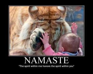 namaste tiger baby